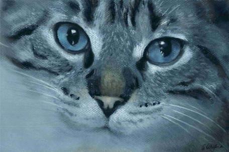 Custom blue eyed tabby cat portrait.