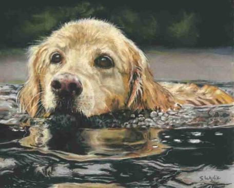 Commissioned pastel pet portrait of a golden retriever swimming.