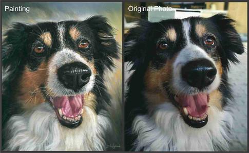 Border Collie Custom Pet Portrait