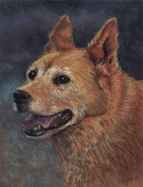 Custom blue heeler chow dog portrait.