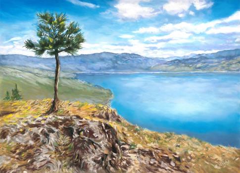 Lone pine on Okanagan Lake