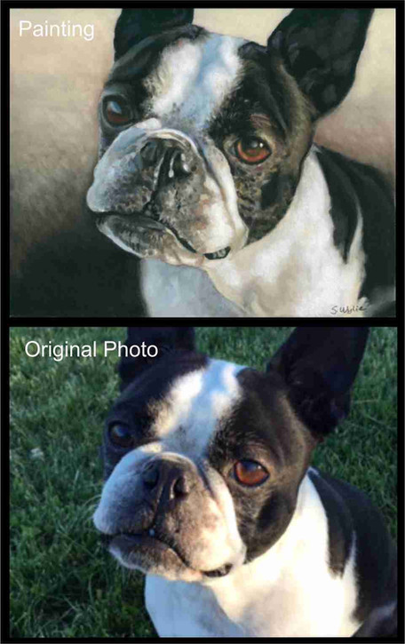 Custom painting of a boston terrier dog.