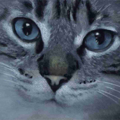 Custom blue eyed tabby cat painted portrati