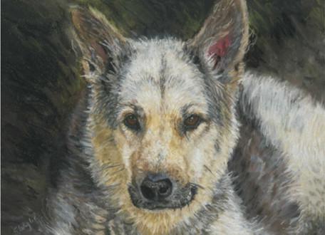 Custom German Shepherd dog portrait.