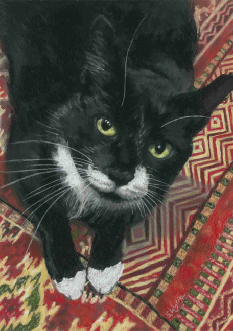 Custom black tuxedo cat portrait.