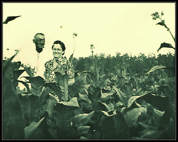 Granddaddy Everett and Grandma Leila Carter up to their eyes in tobacco.