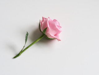 Rose & Your Skin - The Many Benefits