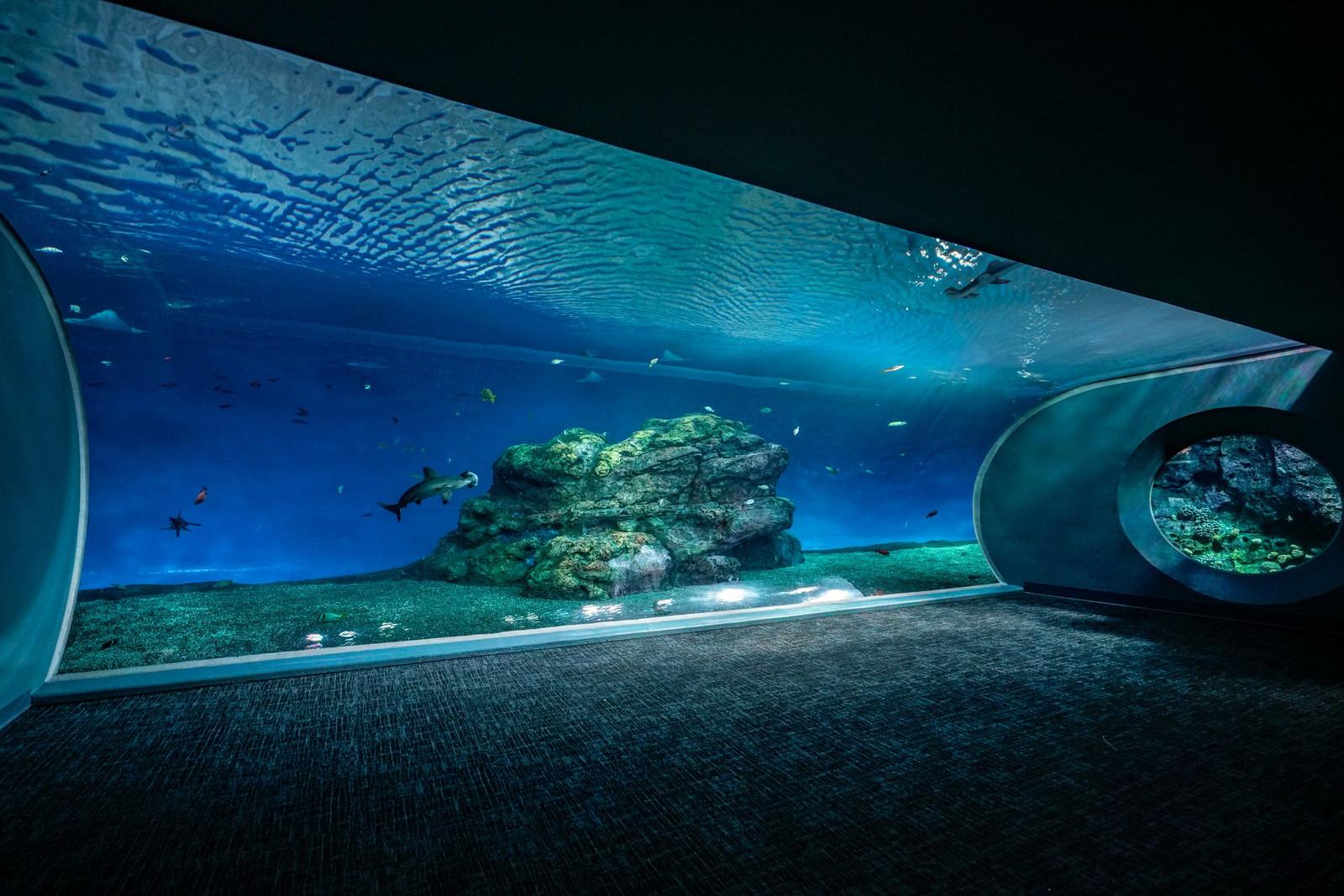 Projects Aquatic Exhibits International