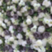Worcestershire Flower Walls - Dusky Wall