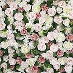 Worcestershire Flower Walls - Lola Weddi