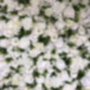Worcestershire Flower Walls - White Foil