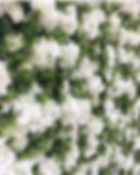 Worcestershire Flower Walls - Penelope F