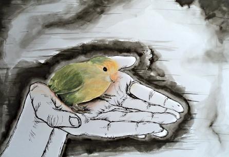 1. bird in hands.JPG