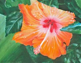 3. orange hibiscus.JPG