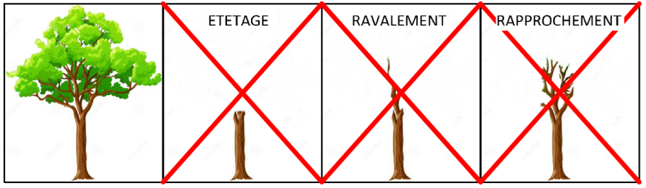 Le ravalement:couper les branches d'un arbre jusqu'à leur empattement (=base élargie d'une branche). Le rapprochement : raccourcir les branches de façon excessive La taille de branches épitones sur un axe plagiotrope : tailler des branches verticales sur un axe horizontal