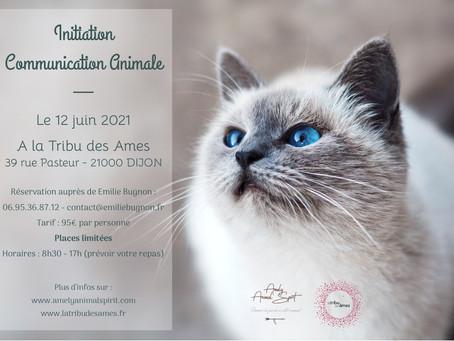 Initiation à la Communication Animale le 12 juin 2021 à Dijon (21000)