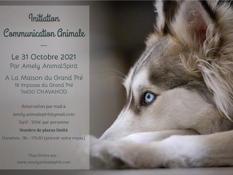 Initiation à la Communication Animale le dimanche 31 octobre 2021 à Chavanod 74650