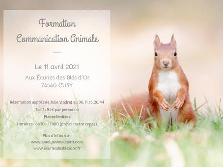 Initiation à la Communication Animale le 11 avril 2021 à Cusy (74540)