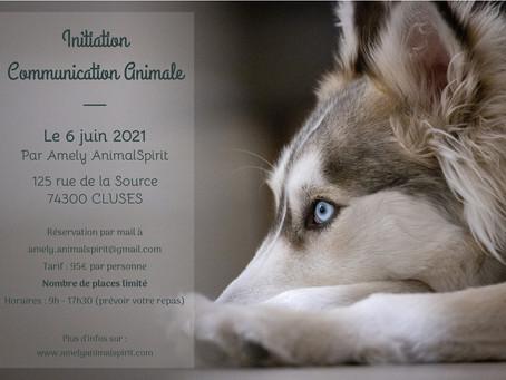 Initiation à la Communication Animale le 6 juin 2021 à Cluses (74300)