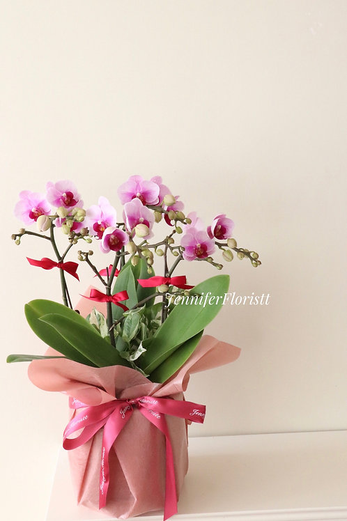 Orchid-0011