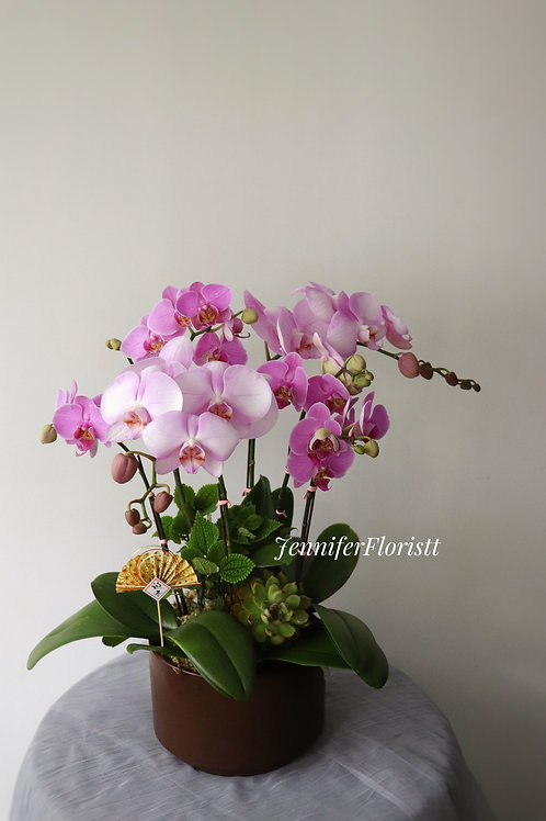 Orchid-0010
