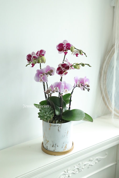 Orchid-009