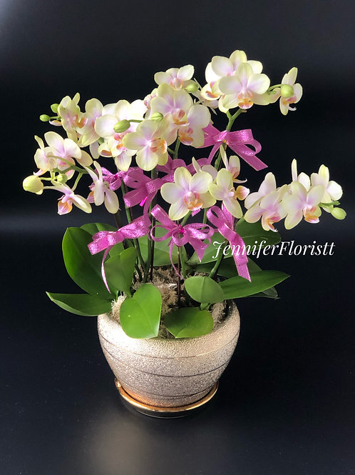 Orchid-008