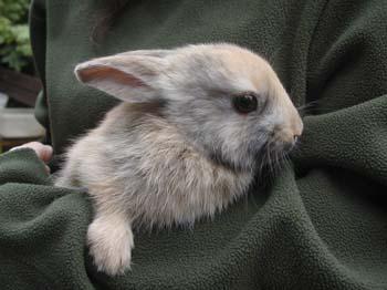 הארנבת המחובקת