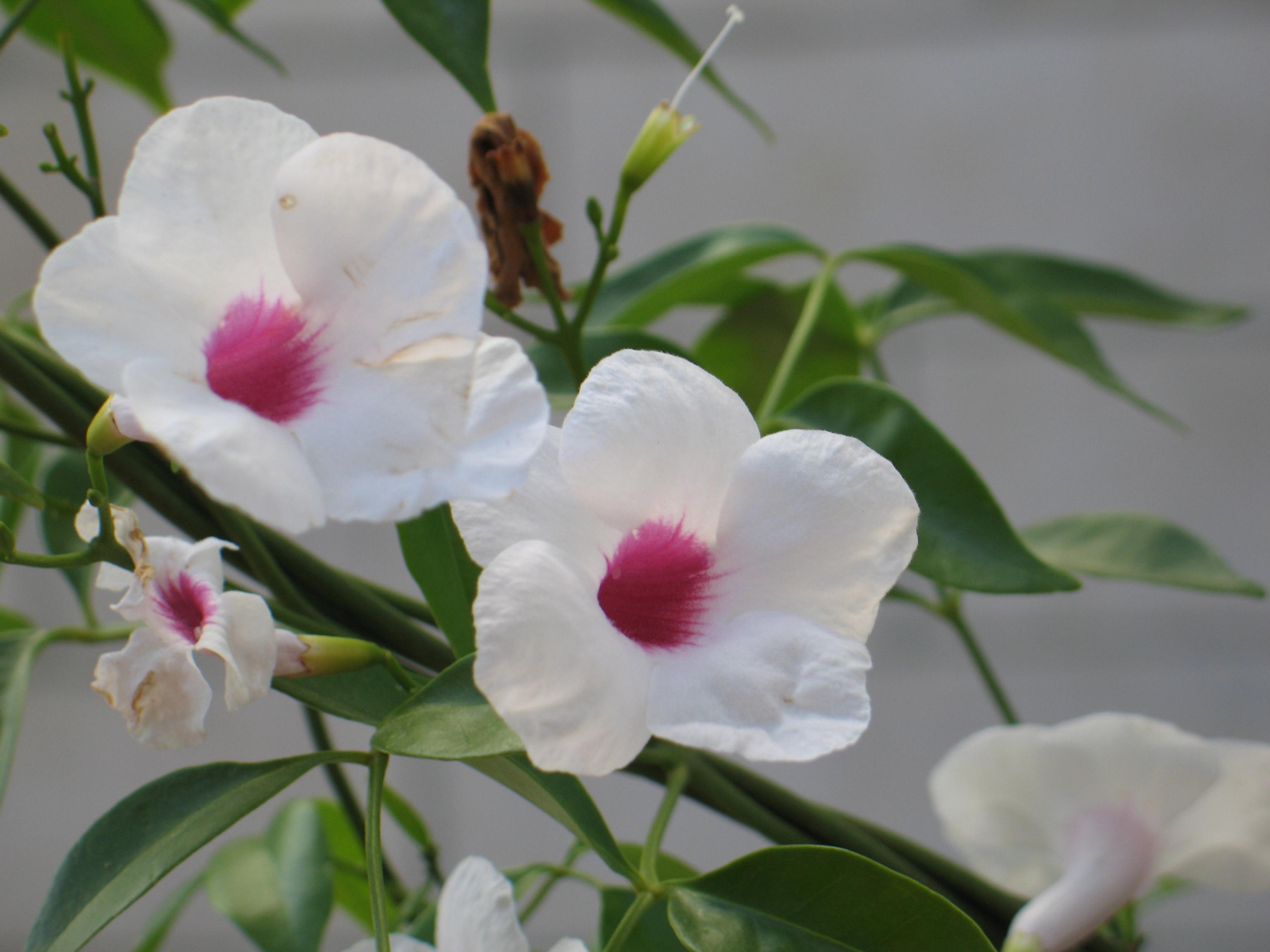 הורוד שבפרח_1.JPG