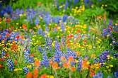Flowers or weeds...