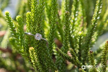 anillo comp-9.jpg