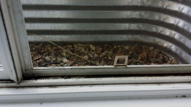Dirty Basement Window