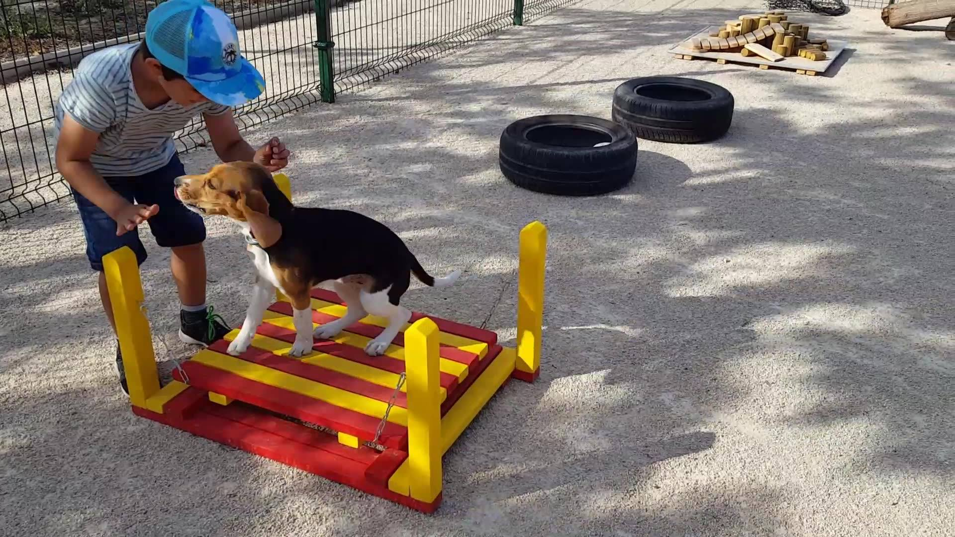 TRUST Resort Canino