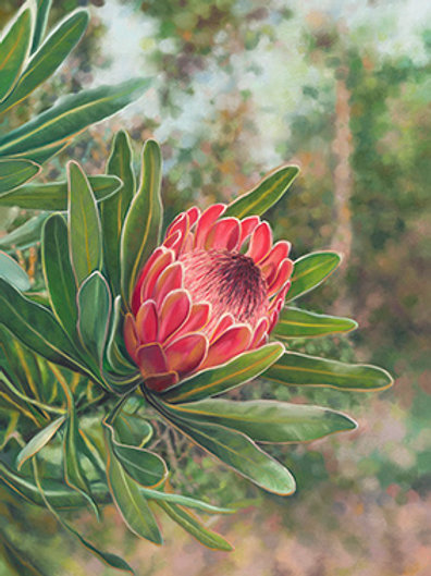 Protea Diptych - Right