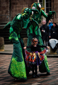 Praying mantis - copyright Colin Cunningham