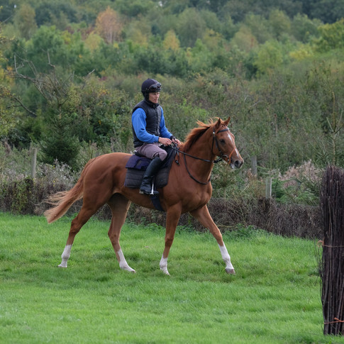 Just off the gallops