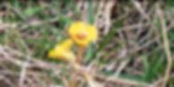 2020-05-22_00-12-23_edited.jpg