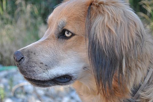 Dog01.jpg