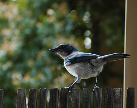 Bird42.JPG