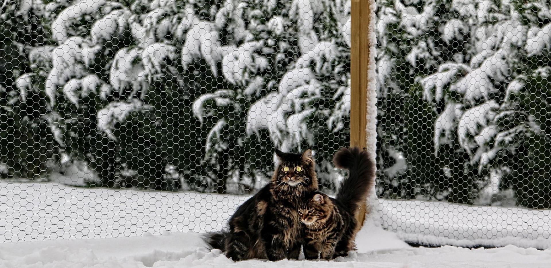 Minos et Nessie