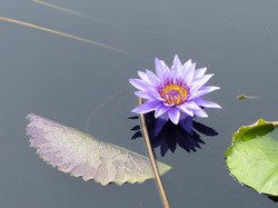 Flower wow 2
