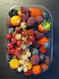 Barcelona berries