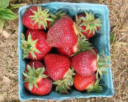 Strawberries in Barcelona
