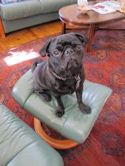 Chloe on Hudson chair