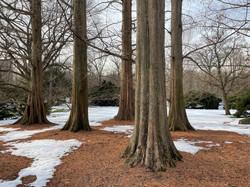 Tree-Botanic-Garden