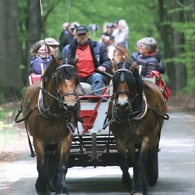Flotte heste