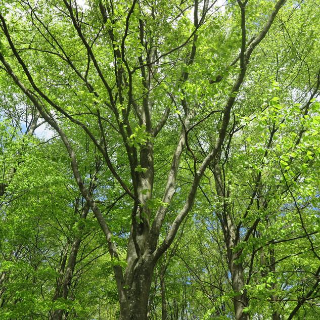 Tur i skoven 11/5- 2019