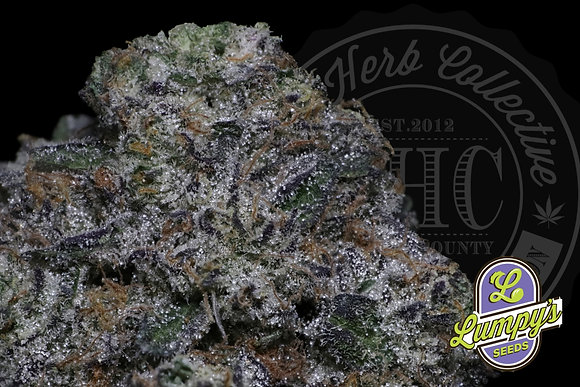 APPLE FRITTER | POPCORN NUGS | LUMPY SEEDS GENETICS