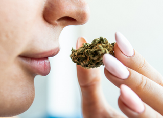 What Cannabis Shouldn't Smell Like