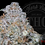 Thumbnail: GHEE BUTTER CAKE 27.8%   TOP SHELF    ROSEZ CO
